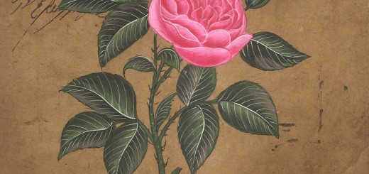 rosa moghul pull the thorn